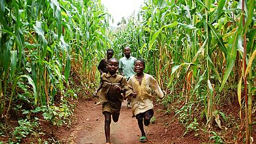 Makpela (9) and Makson (13) are running in the field of sweet corn. Two older friends are following behind. They all smile.